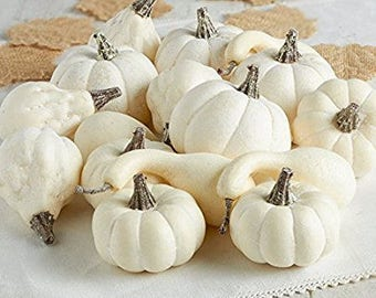 Group of 16 Assorted Artificial Harvest Off White Pumpkins and Gourds
