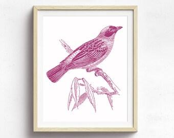 Bird Decor, Bird Wall Art, Nature Print, Vintage Bird Art, Nature Illustration