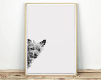 Curious Dog - Wall Art, Dog Print Art, Dog Photo, Printable Nursery, Nursery Decor, Dog Decor, Animal Art, Dog Wall Decor, Poster