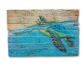 Blue Line Turtle on Lobster Trap