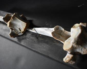 Mounted elk vertebrae bone wall decor taxidermy