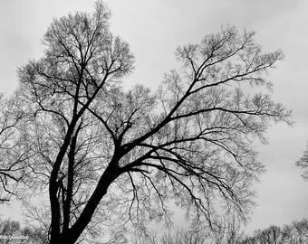 Digital Download Photography - Winter Landscape (Series 2)