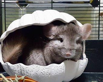 Ceramic Shell House for Chinchillas