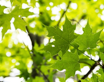 Canvas Green Leaves Photograph