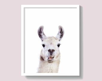 Llama Print, Alpaca Print, Animal , Kids Room Decor, Wildlife Photography, Cute Baby Gift, Large Printable Poster, Instant Download, #073