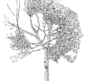 Tree Outside of Work 1