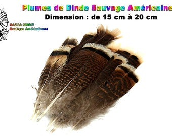 4 large natural feathers from 15 to 20 cm of U.S.A. original Wild Turkey