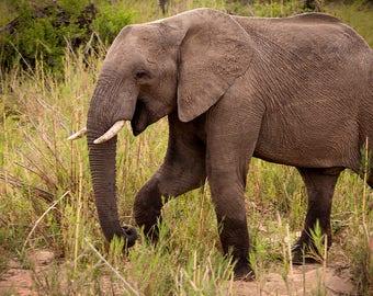 Smiling elephants | Etsy