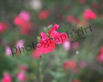 Fine art photography - floral pointillism: 30 x 20