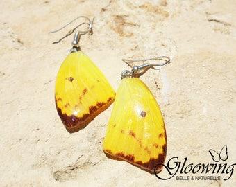 Earrings butterflies, trendy and charming