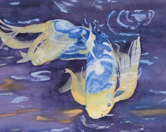 Blue and yellow Koi