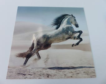 square in the sand jumping horse card