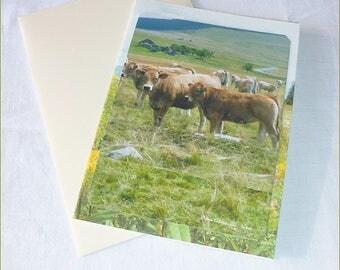 Carte double réalisée à partir de photos de Céline Photos Art Nature Vaches en Auvergne