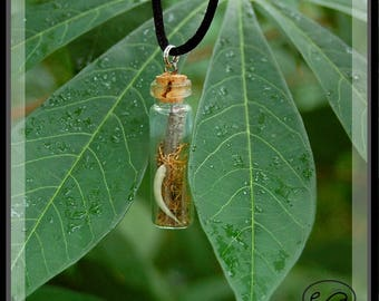 Real Rattlesnake Fang - Glass vial pendant - Necklace