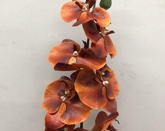 "34"" Phalaenopsis Orchid stem"