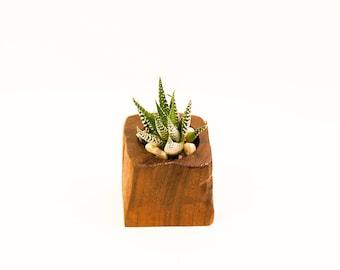 Walnut Succulent Planter - Rustic Collection