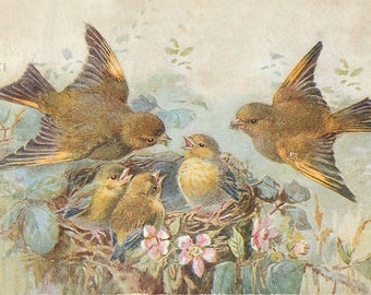 SET of VINTAGE TABLE - Style French postcards - Couple of birds near the nest of their chicks.