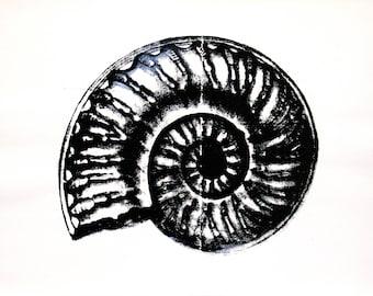 original art print / serigraph art / silkscreen print /black and white / home decor art/ sea fossils / 'Ammonite'