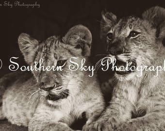 Lion Cub Photo Print