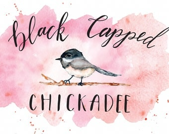 Sweet Black-capped Chickadee Watercolour Print with Hand Lettering