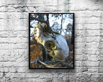 Nature Photography, Wall Art, Autumn Woods, Deer Skull, Digital Download,Wall Art Prints, hunting, deer, Instant Download, cabin decor, art