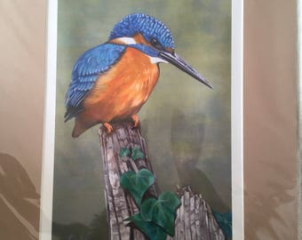 Signed Limited Edition Mounted Print- Kingfisher
