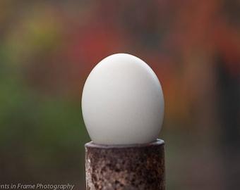 Egg on Farm Machinery