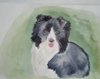 Border Collie, original watercolor painting