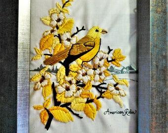 American Robin in Yellow