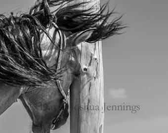 Scratching Post - Mongolia 2015 - Horse - Black and White - Asia - Travel - Equestrian -  Fine Art Photography Print - Photograph