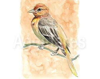 Baltimore Oriole / Animal art / Bird art / Art Print from original watercolor painting