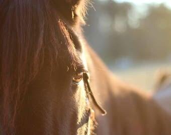 Be Bold . Friesian Horse Print