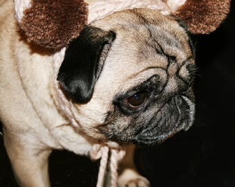 Handknitted cream and brown small dog, pug or baby headband, dark brown handmade pom pom ears