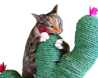 Cactus Scraper