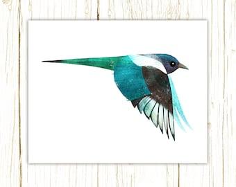Black-Billed Magpie Print -- bird art -- colorful bird art by stephanie fizer coleman illustration