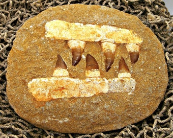 6 Mosasaur Teeth and Jaw-Bone Fossil Dinosaur Period Specimen in Sand Stone Matrix MOS 8