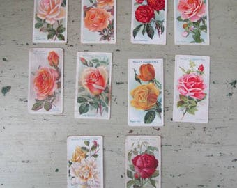 Smell The Roses -  Vintage Cigarette Cards of Roses - Set of 10 - Wills's. - 1930's - Set #7
