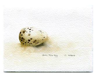 Arctic Tern Egg Original Art Card - Original Hand Painted Watercolor