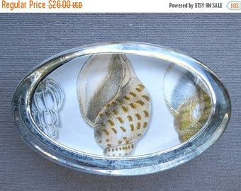 ON SALE Whelk Sea Shell Oval Paperweight