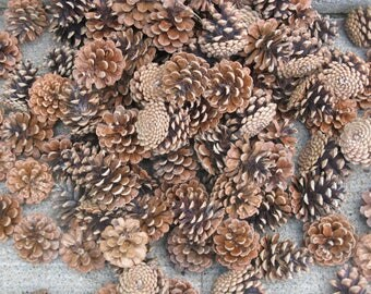 large lot 75 ponderosa pinecones smaller sizes rustic weddings Christmas crafts fall decorating