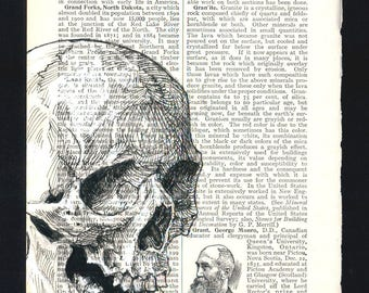 Skull Illustration on Vintage Encyclopedia Page