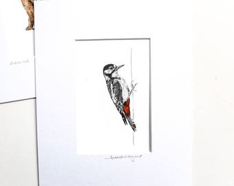 Print - Great Spotted Woodpecker - Pencil Drawing