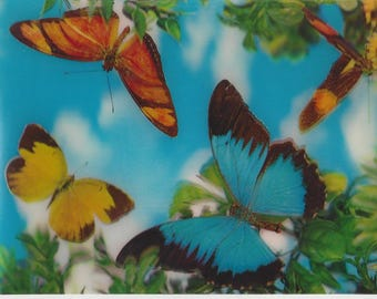 Vintage Lenticular 3D Collector Series Tropical Butterflies Postcard by Super Xograph, 1963