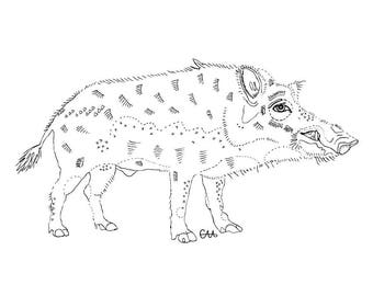 limited edition razorback wild hog illustration art print