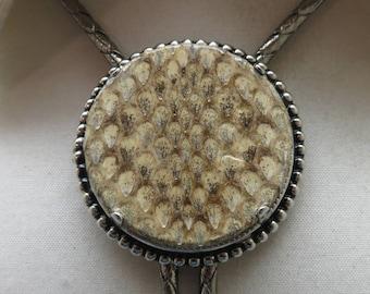 1980s Real Snake Skin Bolo Tie