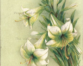 White Day Lilies on a Pale Lime Green Background Silver Glitter spells out Greetings from Phillips 1909 Maine Vintage Postcard