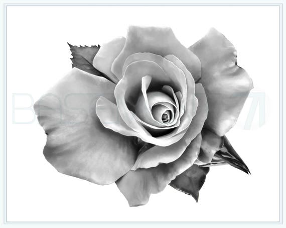 Rose Drawing Digital Art Print As A Black And White Digital