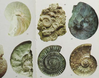 Fossil book, Vintage 1960s book, Fossils in Colour