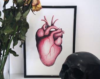 A4 Anatomical Heart Print