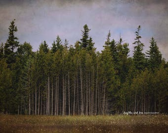 Christmas in July Up North Trees Photo, Nature Landscape Photography, Woodland Green Brown Grey Pines Rustic Cabin Home Decor Wall Art